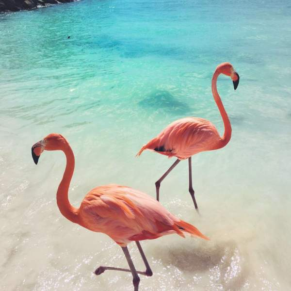 Admire the fauna of the Bahamas