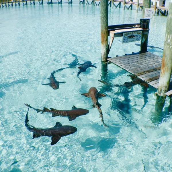Swim with sharks and rays