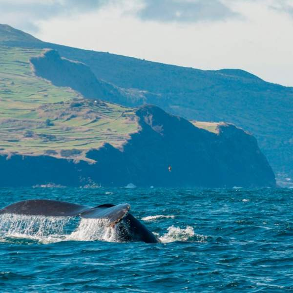 A region renowned for the presence of cetaceans