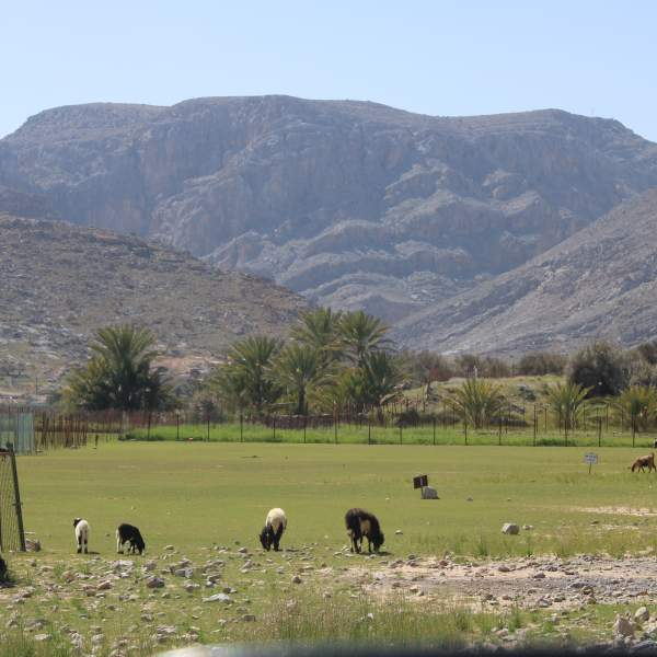 Discover the plains of Musandam