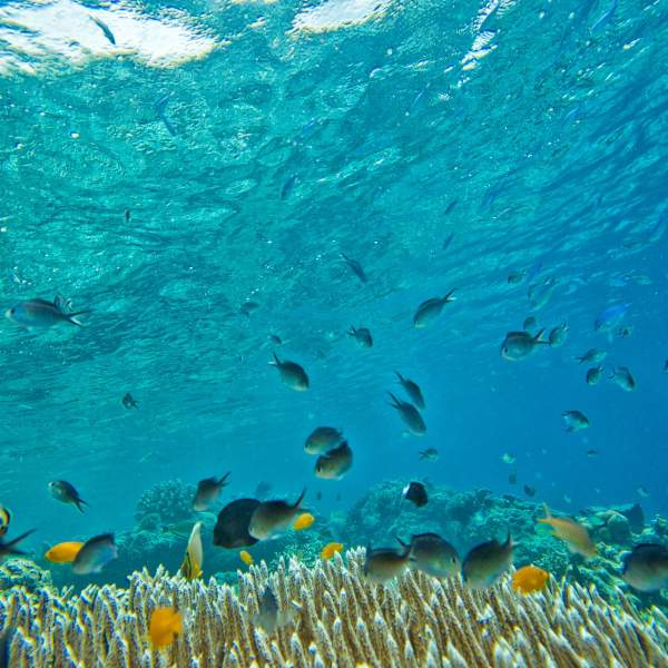 Dive among hundreds of fish!
