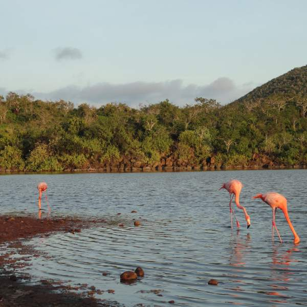The opportunity to observe flamingos