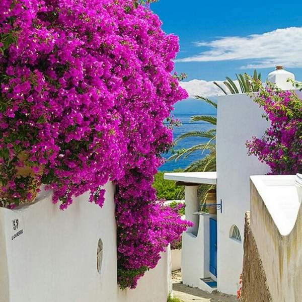 Panarea, a traditional, brightly coloured village