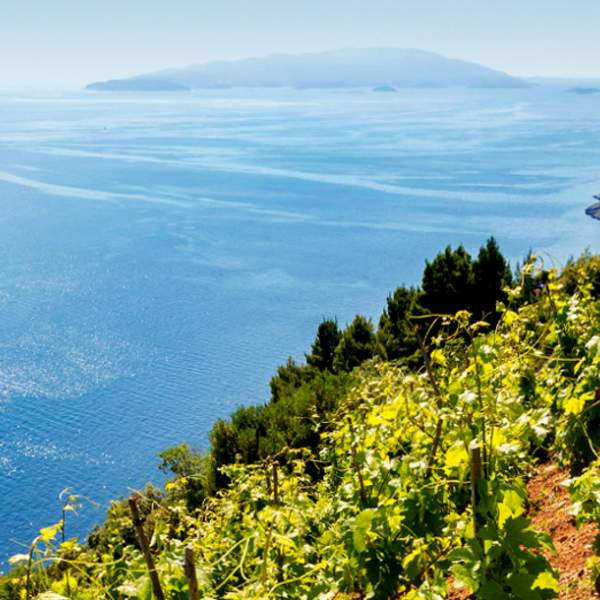 Peljesac Vineyards
